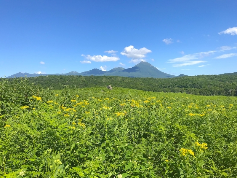 世界自然遺産 知床のフレペの滝の遊歩道からの景色