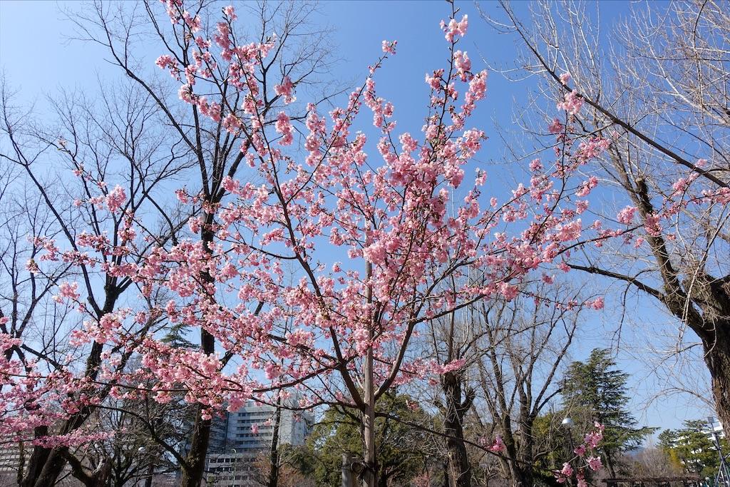 f:id:sasukiti:20210223144509j:image