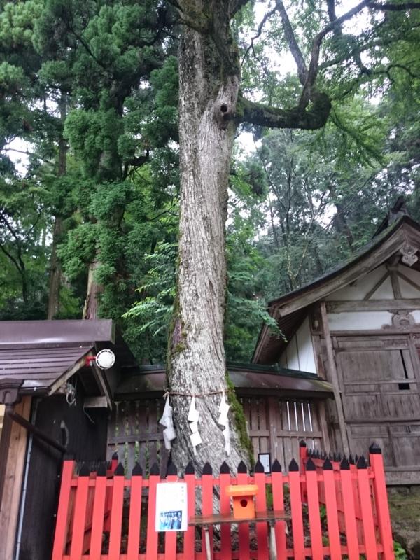 f:id:sasurai-neko:20160701231955j:plain