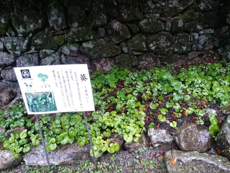 f:id:sasurai-neko:20160701232007j:plain