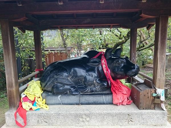 f:id:sasurai-neko:20161005164006j:plain