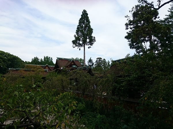 f:id:sasurai-neko:20161005164024j:plain