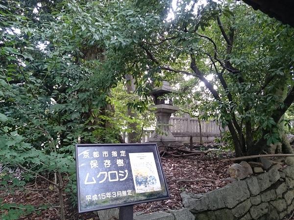 f:id:sasurai-neko:20161005164040j:plain