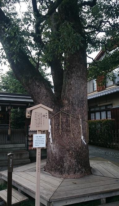 f:id:sasurai-neko:20161005164057j:plain