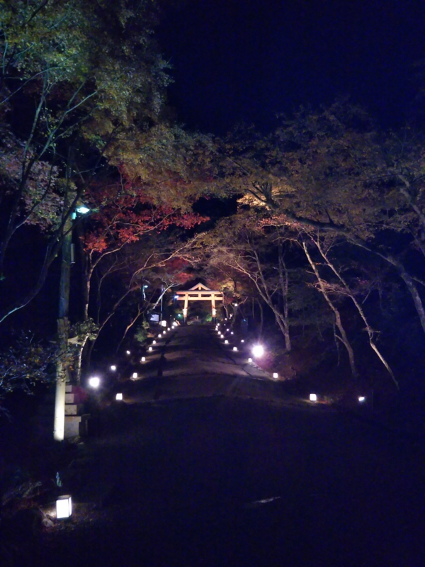 f:id:sasurai-neko:20161130140219j:plain