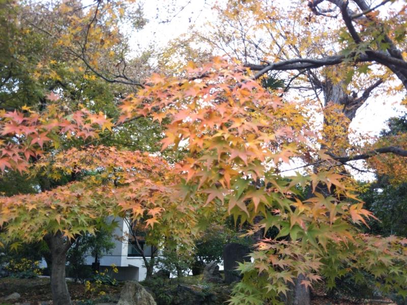 f:id:sasurai-neko:20161130140410j:plain