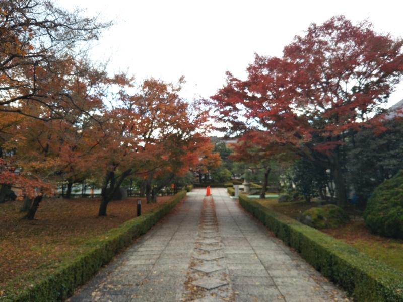 f:id:sasurai-neko:20161130140411j:plain