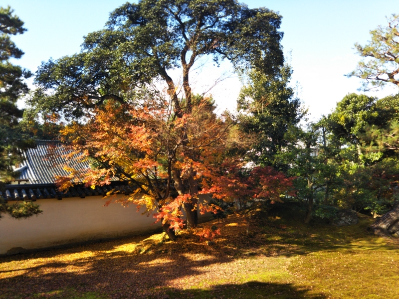 f:id:sasurai-neko:20161130140416j:plain