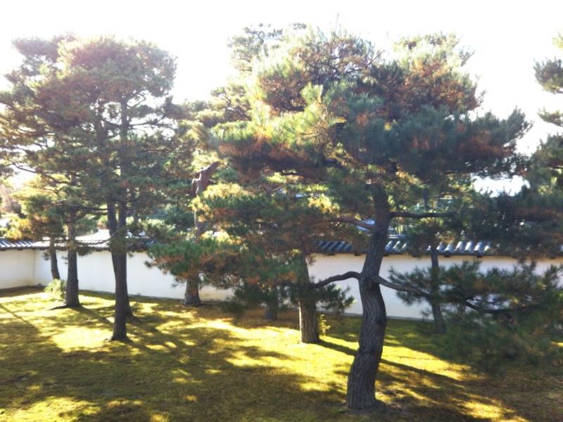 f:id:sasurai-neko:20161130140417j:plain