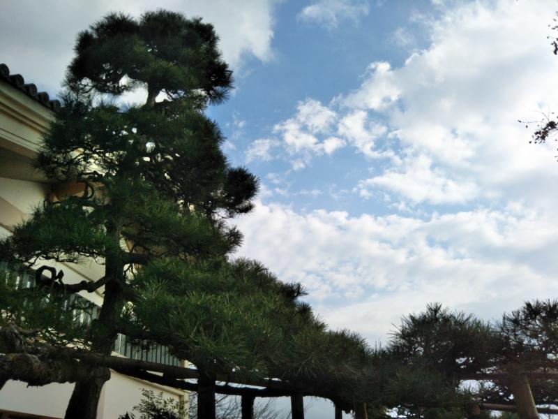 f:id:sasurai-neko:20161207163231j:plain