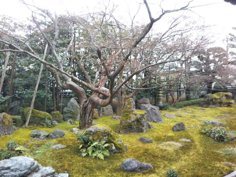 f:id:sasurai-neko:20170209121325j:plain