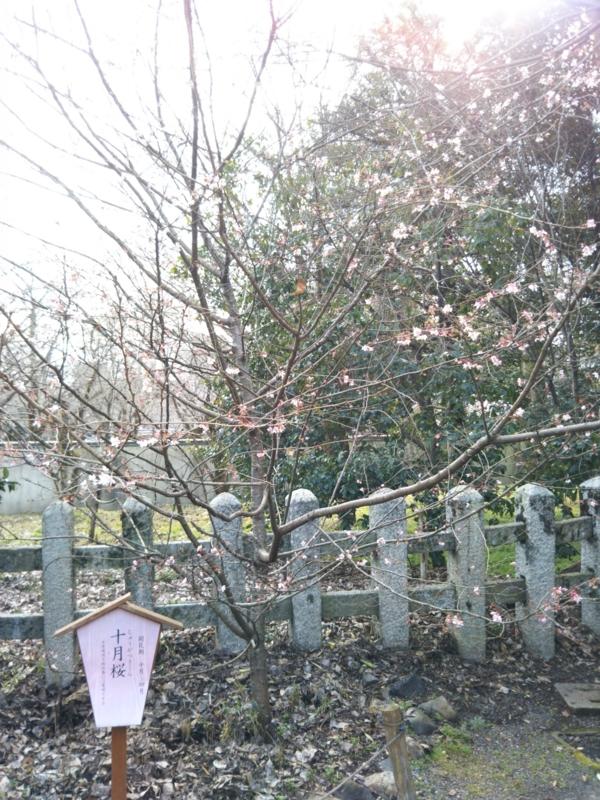 f:id:sasurai-neko:20170209121915j:plain