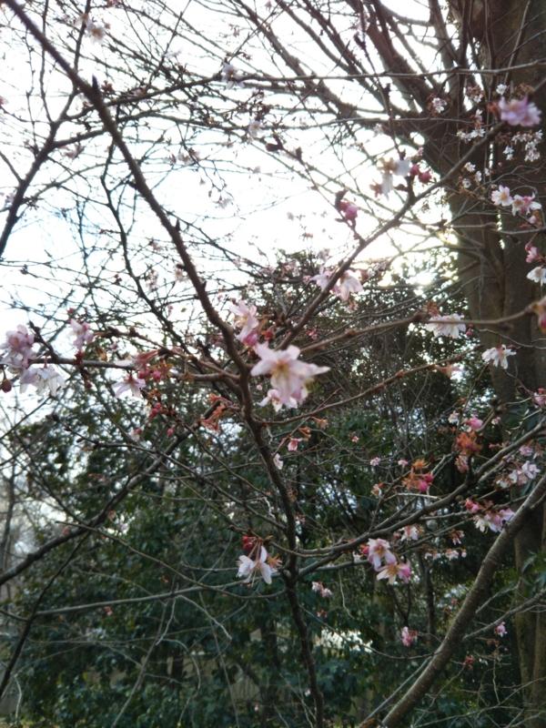 f:id:sasurai-neko:20170209121916j:plain