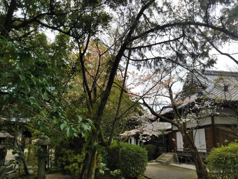 f:id:sasurai-neko:20170424000022j:plain