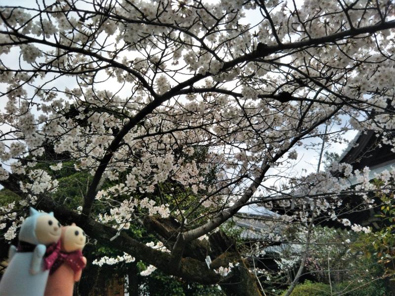 f:id:sasurai-neko:20170424000023j:plain