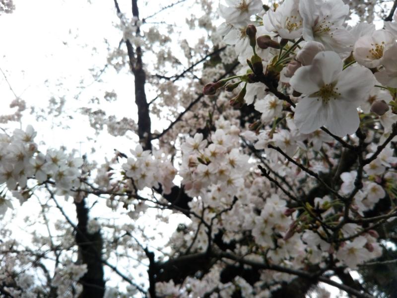 f:id:sasurai-neko:20170424000024j:plain