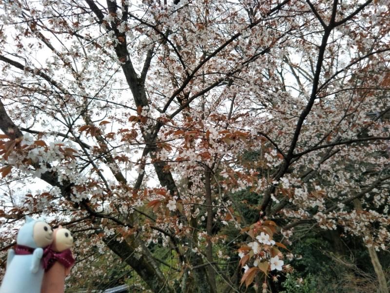 f:id:sasurai-neko:20170424000045j:plain