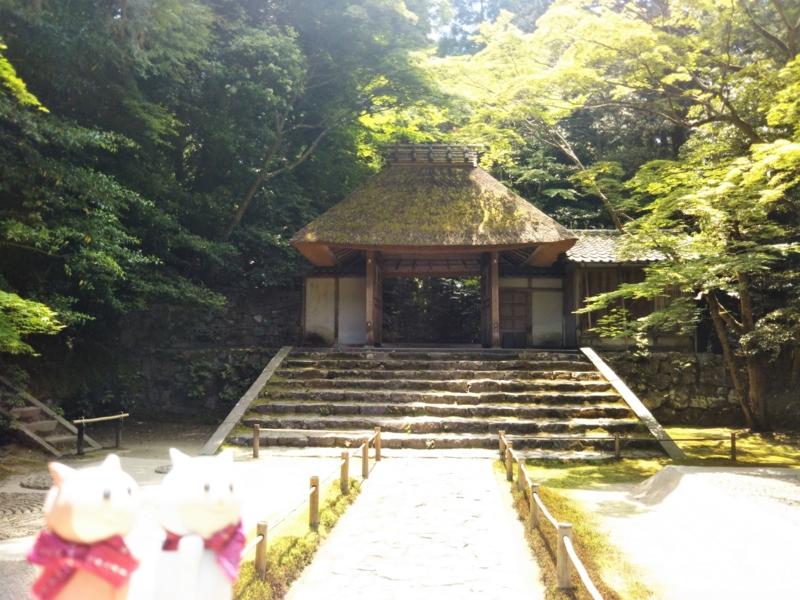 f:id:sasurai-neko:20170527004542j:plain