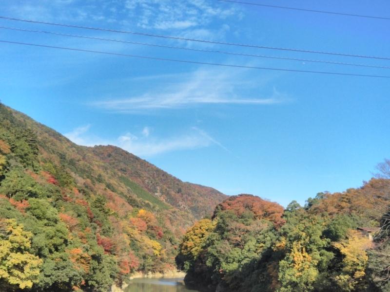 f:id:sasurai-neko:20171122132921j:plain