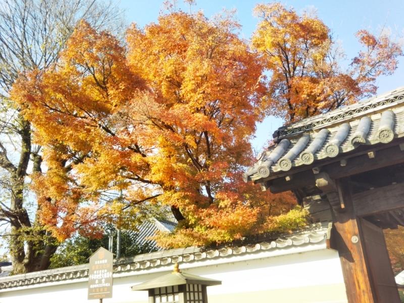 f:id:sasurai-neko:20171129154859j:plain