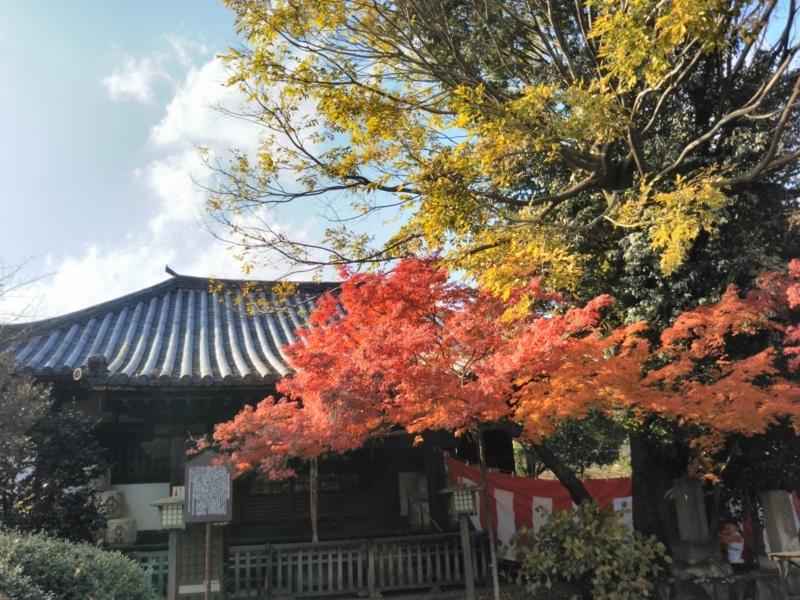 f:id:sasurai-neko:20171129155042j:plain