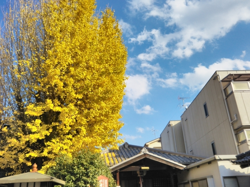 f:id:sasurai-neko:20171129155056j:plain