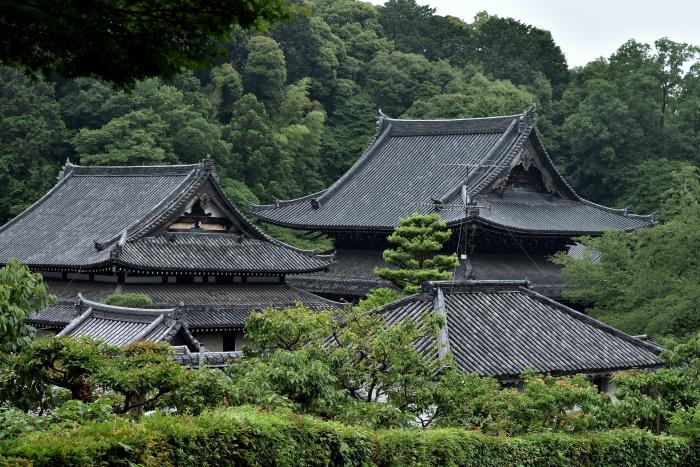 f:id:sasurai1:20200220133748j:plain
