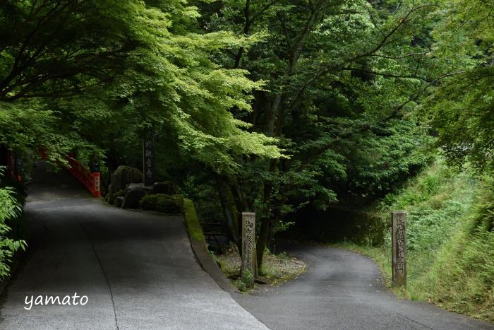 f:id:sasurai1:20200220134056j:plain