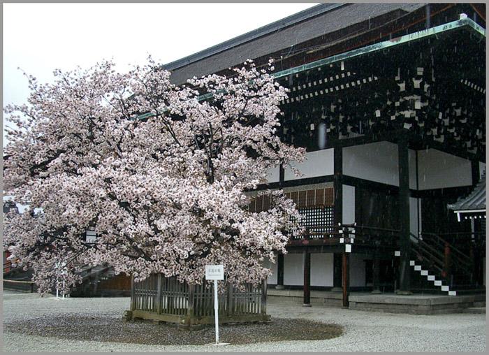 f:id:sasurai1:20200415105407j:plain
