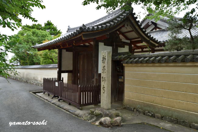 f:id:sasurai1:20200419164230j:plain