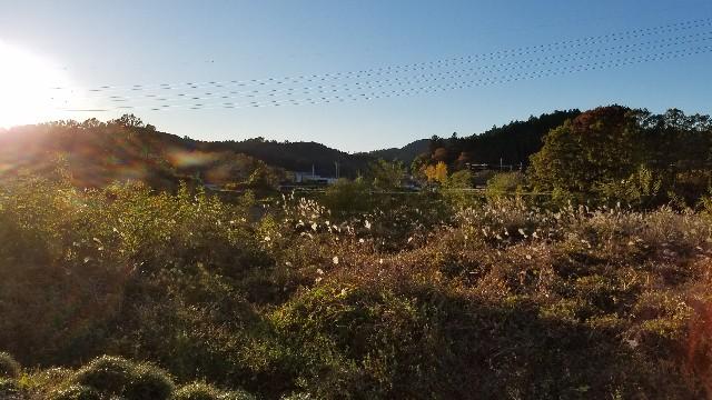 f:id:sato-saito-_u5963:20171111214657j:image