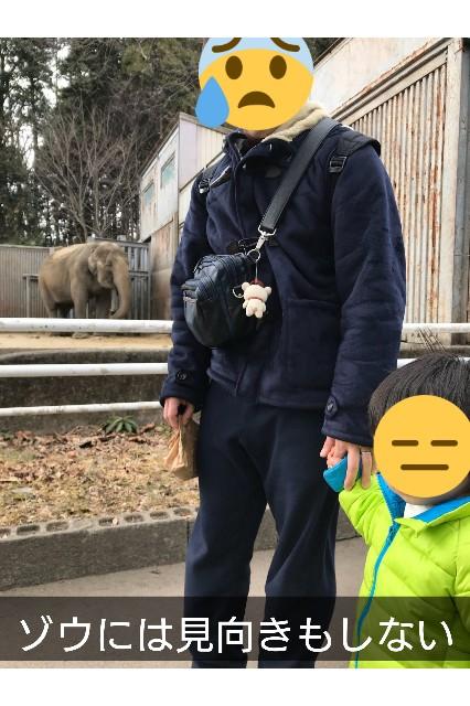 ゾウを見ない子