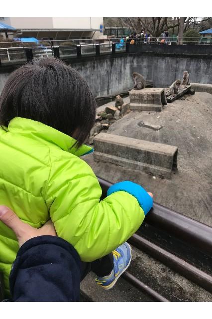 サルを眺める子
