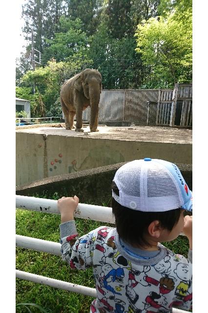 ゾウを見る子