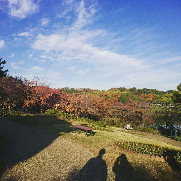 f:id:satoko_kobun:20171114180922j:plain