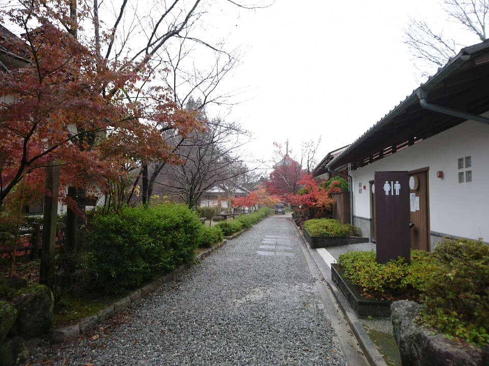 f:id:satoko_kobun:20171119230333j:plain