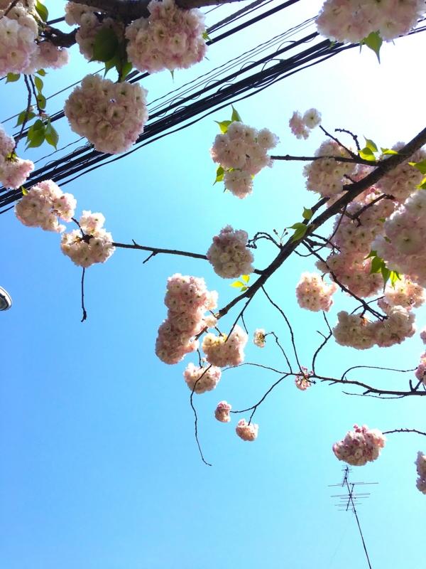 f:id:satokoochiai:20160419101127j:image:h300