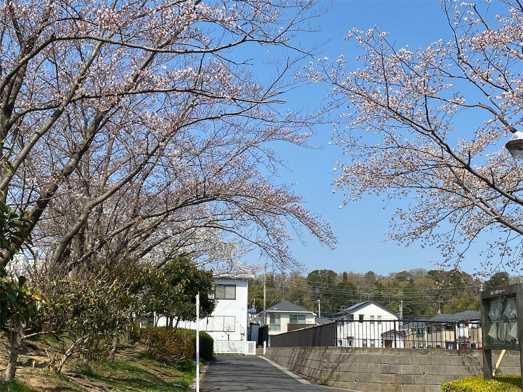 f:id:satomi-tanaka:20200401161850j:image