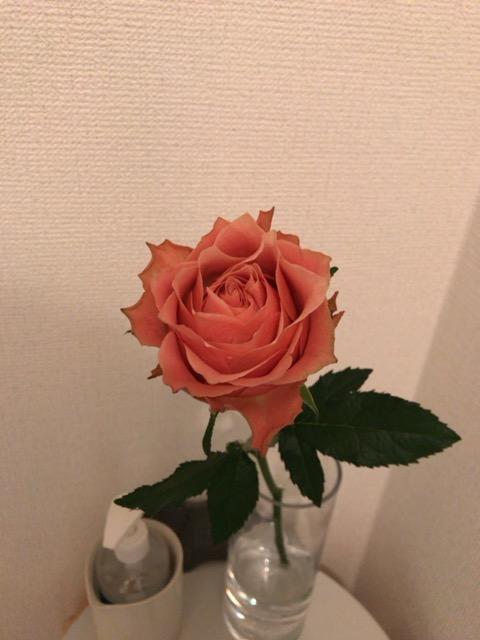 f:id:satonoyukiko:20210122062352j:plain