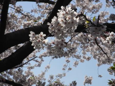 f:id:satoru_net:20090407132925j:image