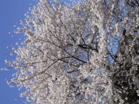 f:id:satoru_net:20090407134316j:image