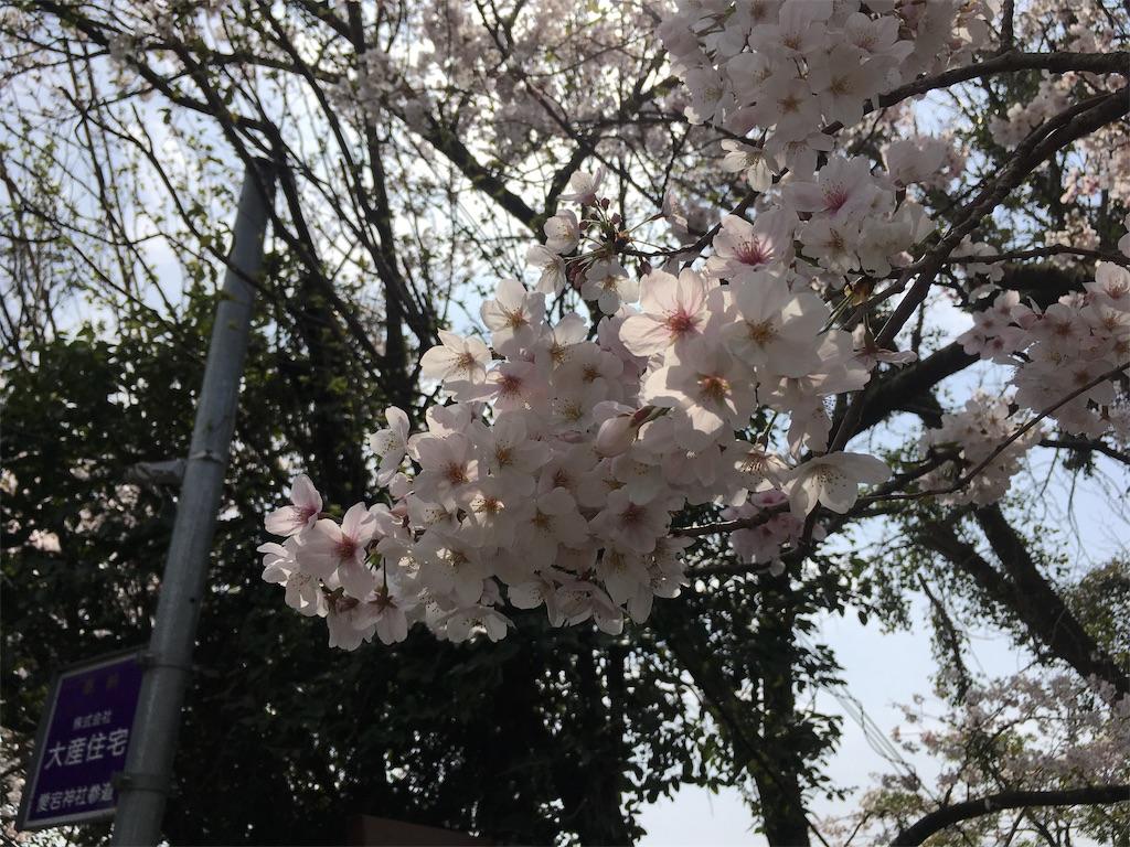 f:id:satoruriko:20190401222156j:image