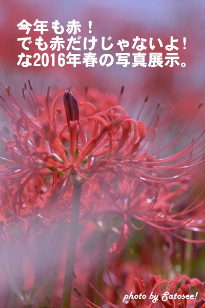 f:id:satosee:20151023110348j:plain