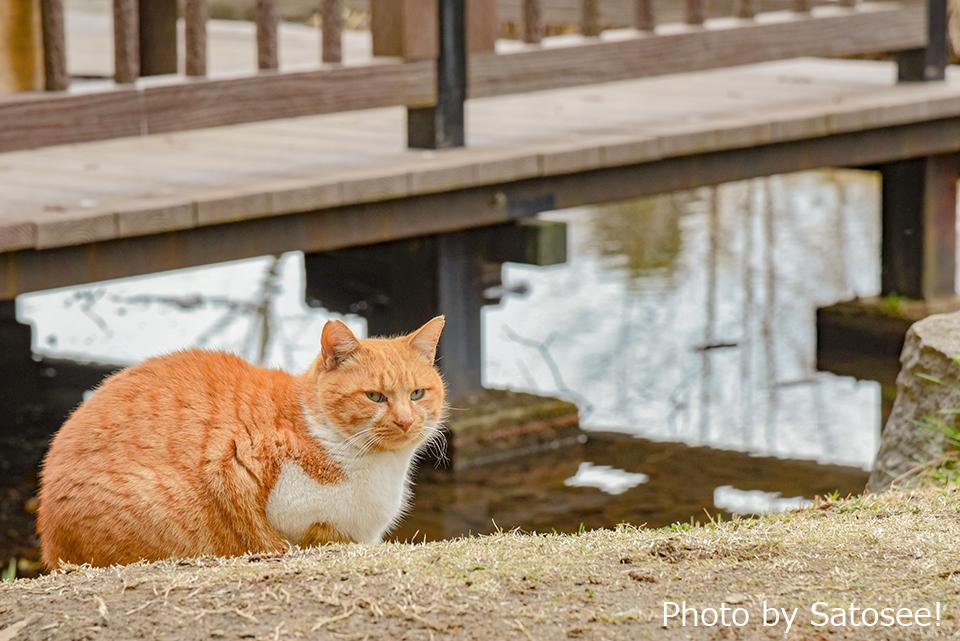公園の池のそばの猫