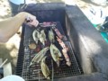 ここからは魚のターンだ