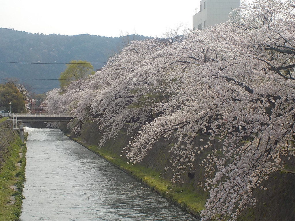 f:id:satoshi_kodama:20200403095154j:plain