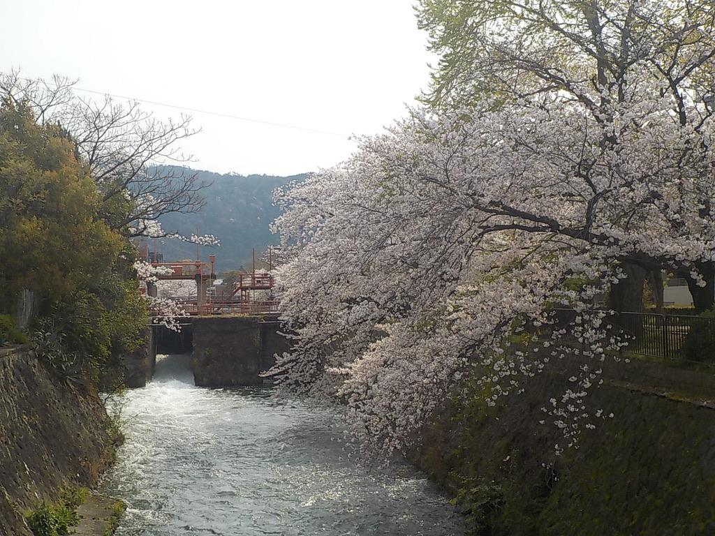 f:id:satoshi_kodama:20200403095436j:plain
