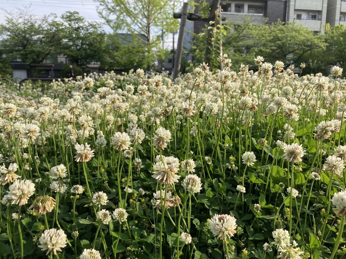 f:id:satoshi_kodama:20200502163641j:plain
