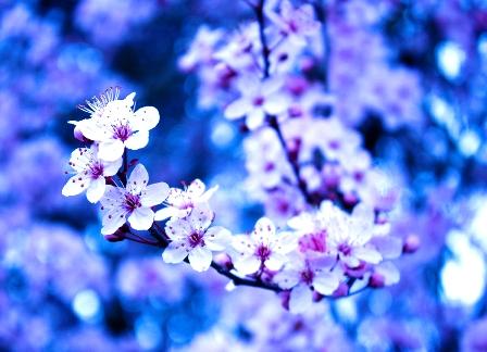 f:id:satoshi_su:20090321212336j:image