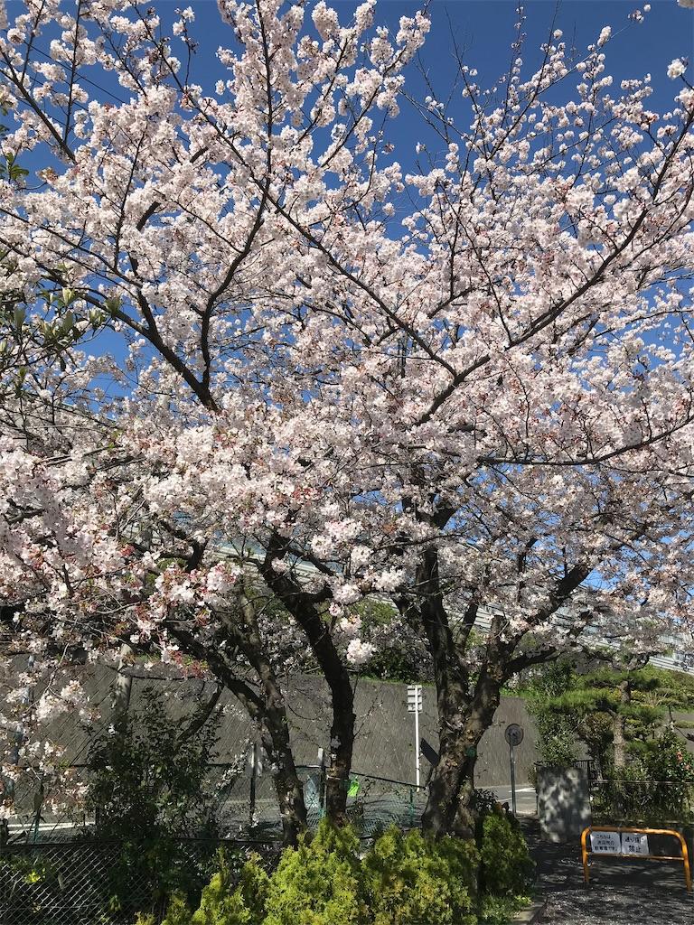f:id:satoshi_watanabe:20200408174415j:image